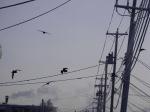 raven wires